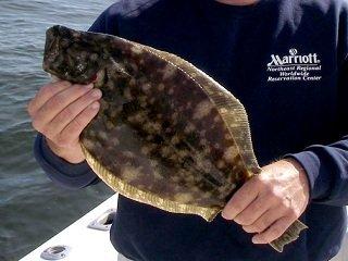 file_166387_0_flounder