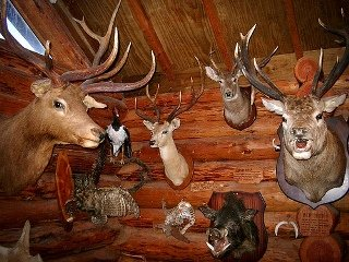 Taxidermy Customer
