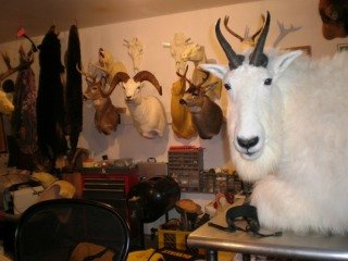 file_166827_0_taxidermyshop