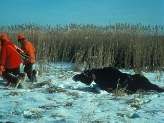 file_167491_0_moose_hunt