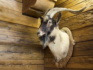 file_167590_0_taxidermy