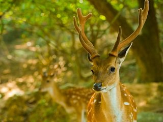 file_167600_0_deerphoto