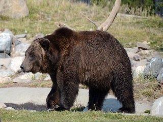 file_167751_0_bear