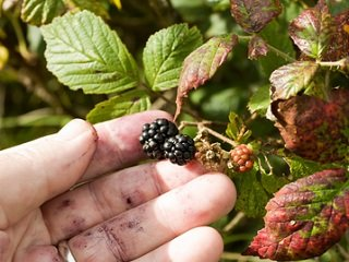 file_167799_0_berry