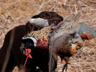 Maintenance and Care for Your Hunting Dog