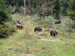 file_168093_0_bears_roaming