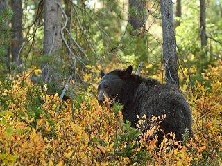 file_168095_0_bear