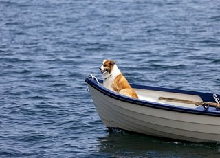file_168065_0_dog_boat