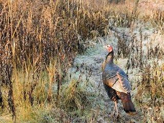 file_168103_0_turkey