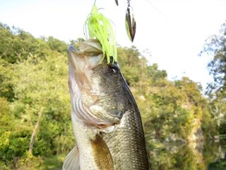 file_168143_0_spinnerbait_bass