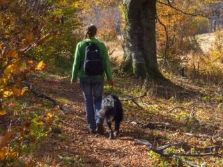10 Best Dog Friendly Getaways