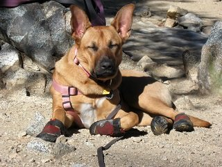 file_168279_0_dog_booties