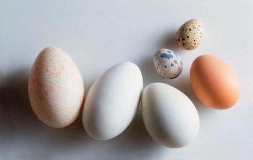 eggs (520x329)