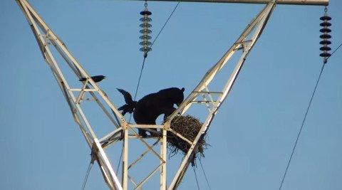 bear-pole