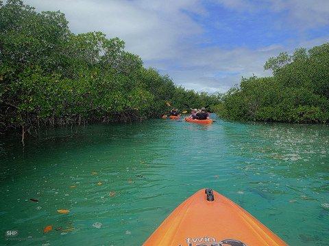 4 Top Kayaks for Any Situation
