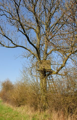 Ground Blinds vs Tree Stands: A Hunter's Dilemma
