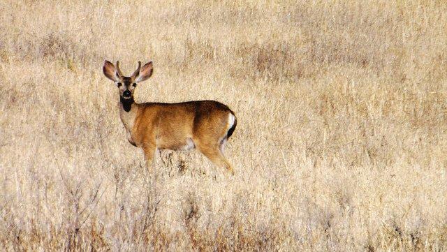 deer-brownfield