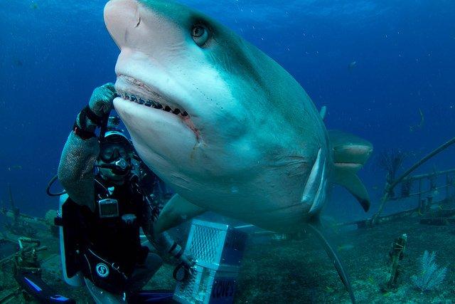 Shark Attack Chances Down Despite Recent Bites