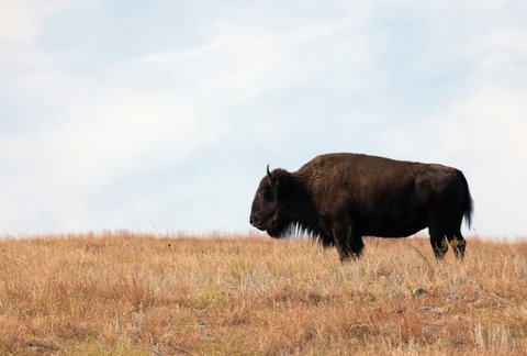 7 Great Places to Spot Wildlife in America