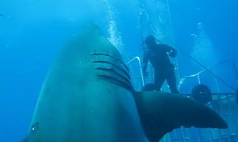 Giant 20-foot Shark Possibly Largest Ever Caught on Film