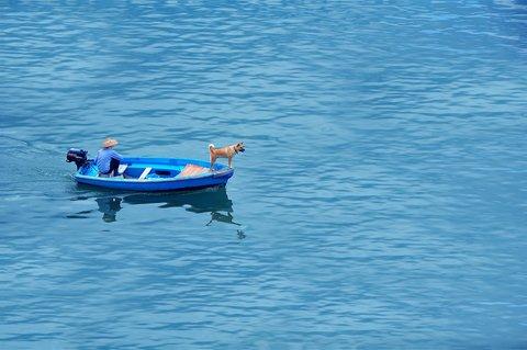 fisherman boat dog