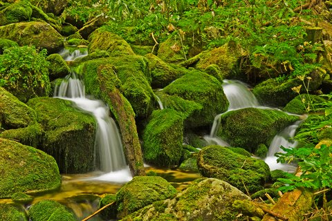 stream moss