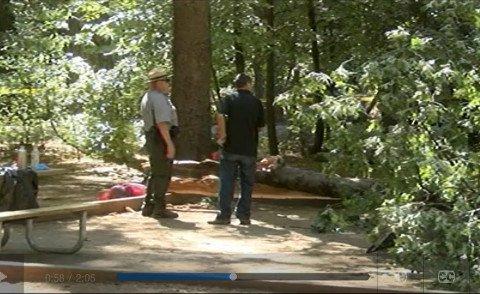 Fallen Tree Limb Kills Two Teens at Yosemite Campground