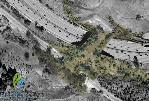 California Wants $38 Million Bridge for Big Cats