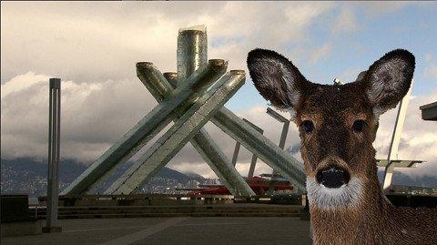 Sad End Comes to Vancouver's Downtown Deer