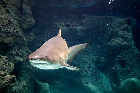 California Shark Encounters Put Beachgoers on Edge