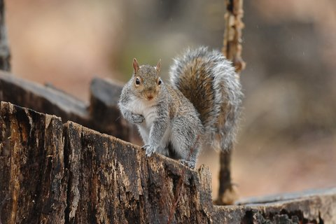 Tips for Taking More Squirrels This Fall