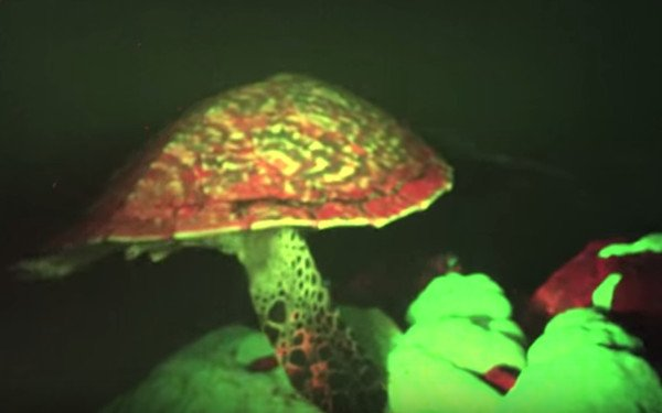 sea-turtle-glowing