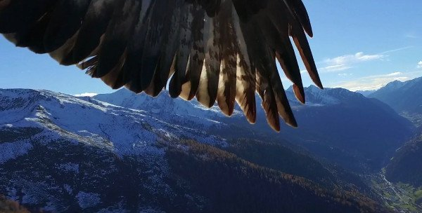 eagle-drone