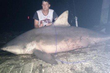 Australian Hooks Monster Bull Shark on Popular River