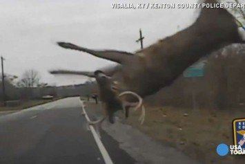 Deer Catapults Off Squad Car in Kentucky
