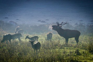 Tips for Safely Driving Deer in Groups