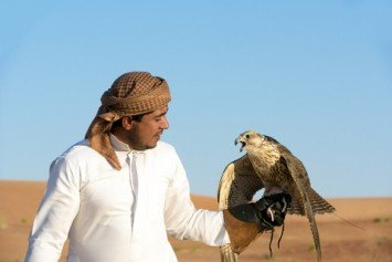 Qatari Falconers Still Missing in Southern Iraq Abduction