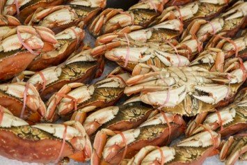 West Coast Dungeness Crab Season A Bust