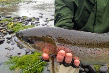 3 Tricks to Catch More Steelhead This Winter
