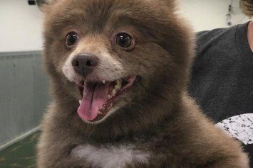 Is This A Dog Or Bear Cub?