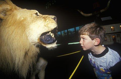 lion stuffed