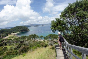 Game Fishing in New Zealand's Bay of Islands