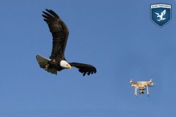 Dutch Police Turn to Raptors to Combat Drones