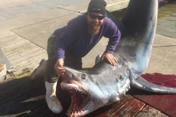 Louisiana Charter Captain Reels in 550-Pound Mako Shark