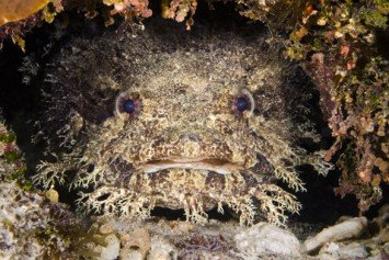 An Ode to the Amazing Toadfish