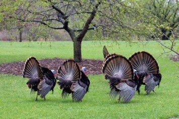 Preparing for Spring Turkey Season
