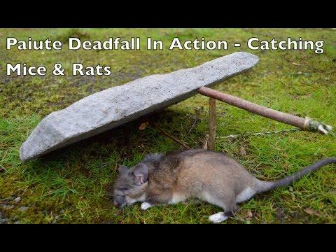 paiute-deadfall