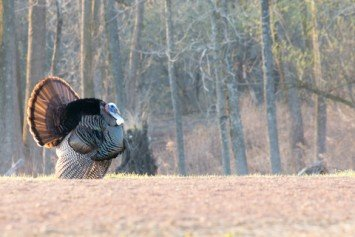 Tips for Turkey Hunting with Traditional Bow