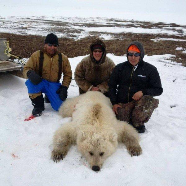 Grizzly polar bear