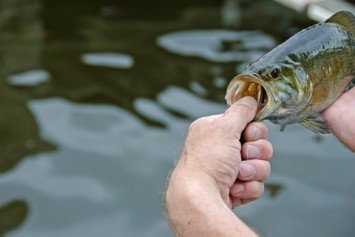 Catching Smallmouth Bass on the Fly